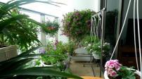 Ngắm ban công rực rỡ sắc hoa ở căn hộ trên tầng 22