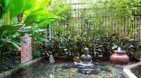 Ngắm căn nhà xanh mát của nam ca sĩ Quang Dũng
