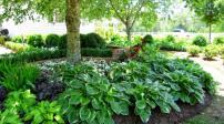 Cách khắc phục khi khu vườn thiếu ánh sáng