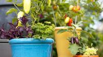 Trang trí vườn đẹp với chậu rau thơm hoa quả