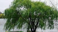 5 loại cây không nên trồng trong vườn nhà