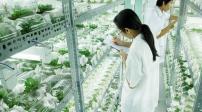Hà Nội: Chi gần 300 tỷ đồng xây Khu Nông nghiệp công nghệ cao