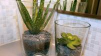 Phòng tắm hút mắt nhờ những loại cây xanh hữu ích