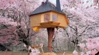 Ngẩn ngơ trước 15 thiết kế nhà trên cây tuyệt đẹp
