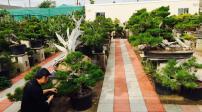 Mê mẩn với những sân vườn của người nổi tiếng