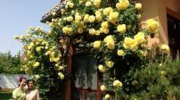 Mảnh vườn Việt đẹp ngỡ ngàng trên đất Hungary