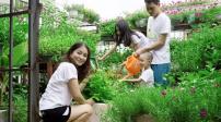 Chiêm ngưỡng vườn rau sạch siêu đẹp trên sân thượng
