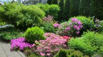 Ngất ngây với vườn hoa của gia đình Việt ở Đức