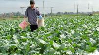 Bộ Tài chính đề xuất miễn thuế sử dụng đất nông nghiệp đến năm 2020