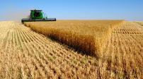 Nga: 12 triệu ha đất nông nghiệp