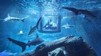 Phòng ngủ kính siêu độc đáo có đàn cá mập bơi quanh