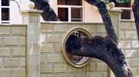 Những cấm kị về cây cối trong phong thủy nhà ở