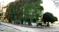 Ngôi nhà ấn tượng với rèm cây xanh mát ở Quảng Ninh