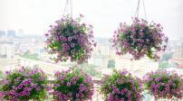 Vẻ đẹp khó cưỡng của ban công tràn ngập hoa
