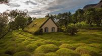 Những ngôi nhà được bao quanh bởi lớp cỏ dày