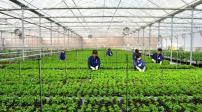 Đà Nẵng: Phê duyệt quy hoạch 7 vùng nông nghiệp công nghệ cao