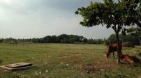 Phải làm gì khi mua đất nhưng thuộc diện quy hoạch?