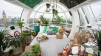 Thiết kế ngôi nhà mang cảm hứng rừng nhiệt đới