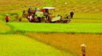 Bắc Giang: 127ha đất được chuyển đổi mục đích sử dụng