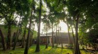 Ngôi nhà độc đáo có cây mọc xuyên mái