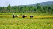 Hà Tĩnh: Chuyển đổi mục đích sử dụng 17,3ha đất trồng lúa