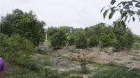 Hết hạn sử dụng đất trồng cây lâu năm có bị thu hồi?