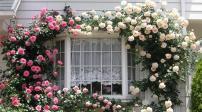Độc đáo ngôi nhà có dàn hoa leo tuyệt đẹp