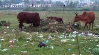 Đà Nẵng: Cấp đất cho doanh nghiệp không có dự án đi kèm