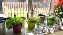 Một số cây trồng hợp phong thủy trong nhà bếp