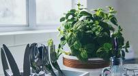 Cách chọn những loại cây trồng trang trí phù hợp với từng phòng trong nhà