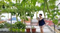Vườn sân thượng đẹp và đủ các loại rau trái như siêu thị mini ở Hải Phòng