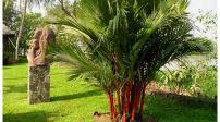 7 loại cây cảnh trồng trước cửa nhà giúp đem đến may mắn, phúc lộc
