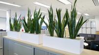 7 loại cây cảnh nên có trong các văn phòng làm việc
