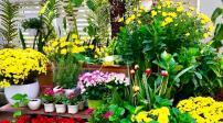 10 mẫu thiết kế sân vườn phù hợp cho mùa xuân