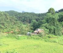 Bán 36 Ha đất đồi tại xã Trường Sơn , Lương Sơn , Hoà Bình.