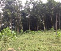 Bán 3Ha - 8Ha đất ại xã Trường Sơn, Lương Sơn, Hoà Bình.