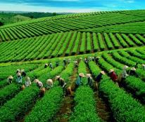 An cư lạc nghiệp tại Sông Công, Phổ Yên, Thái Nguyên - hãy đến với VPC