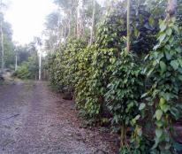 13000m2 vườn trái cây thuộc xã Bàu Trâm, thị xã Long Khánh