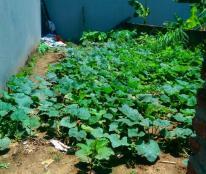Bán đất thổ cư 40m2-Giá 55T/m2 tại Kim Giang-Thanh Xuân.oto cách 15m.ngõ thông.0988352149