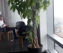 Cho thuê chung cư căn hộ gia đình diện tích 45m2 tại Phòng 924 CT8 Đại Thanh - Thanh Trì - Hà Nội