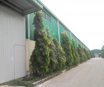 Cho thuê nhà xưởng 5000 m2, trong KCN Tân Đô, Đức Hòa, Long An
