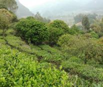 Bán trang trại thành phố Lai Châu, diện tích rộng hơn 3,5ha