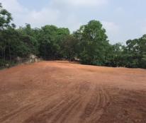 Cho thuê mặt bằng đất trống tại Xã Trường Thịnh, Phú Thọ, Phú Thọ diện tích 3500m2