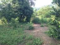 Bán đất, nhà và trang trại xã Song Thuận, huyện Châu Thành, Tiền Giang