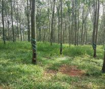 11000m2 đất đỏ vườn cao su thuộc Ấp Đồi Rìu, xã Hàng Gòn, thị xã Long Khánh