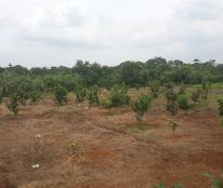 2321m2 nhà vườn chuồng trại và đất tại Ấp Tân Xuân, xã Bảo Bình