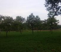 Cho thuê đất 10x20m, số 102 mặt tiền Lương Đình Của, Q.2
