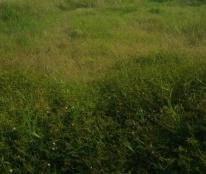 Bán 1090m2 có 120m2 thổ cư xã Tân quý Tây, huyện bình chánh