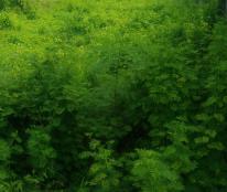 Chú 4 cần vốn làm ăn bán 1000m2 đất vườn ngay mặt tiền đường 3B xã hưng long huyện bình chánh
