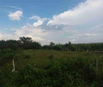 Cần bán gấp 5 công đất ruộng (4900m2) hẻm lê Văn Lương, Nhơn Đức, giá 1.8 tỷ